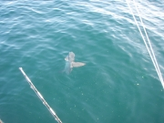 Belmar Offshore Fishing_5